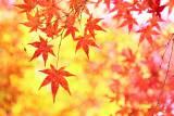 箱根 紅葉シーズン到来!!