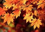 秋冬旅早期割引のご案内